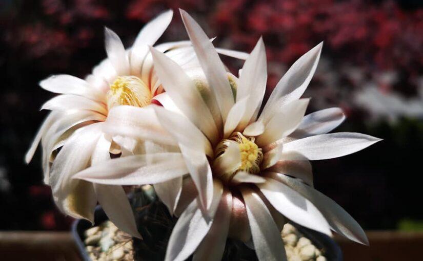 Переносные теплички для кактусов