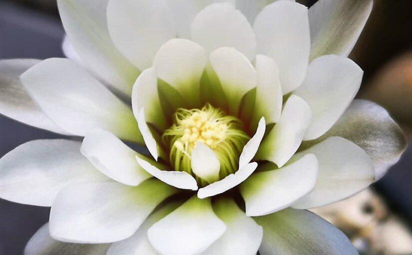 Свет для кактусов