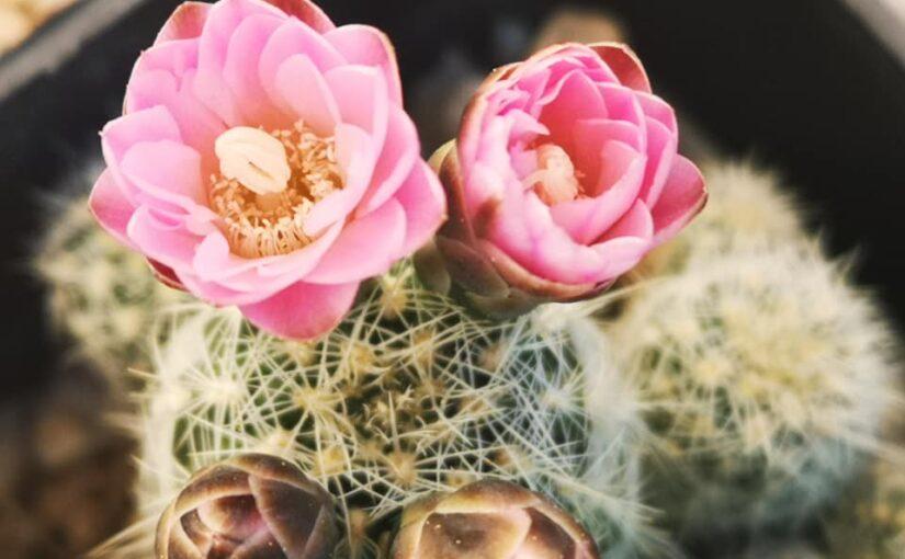 Теплица для кактусов