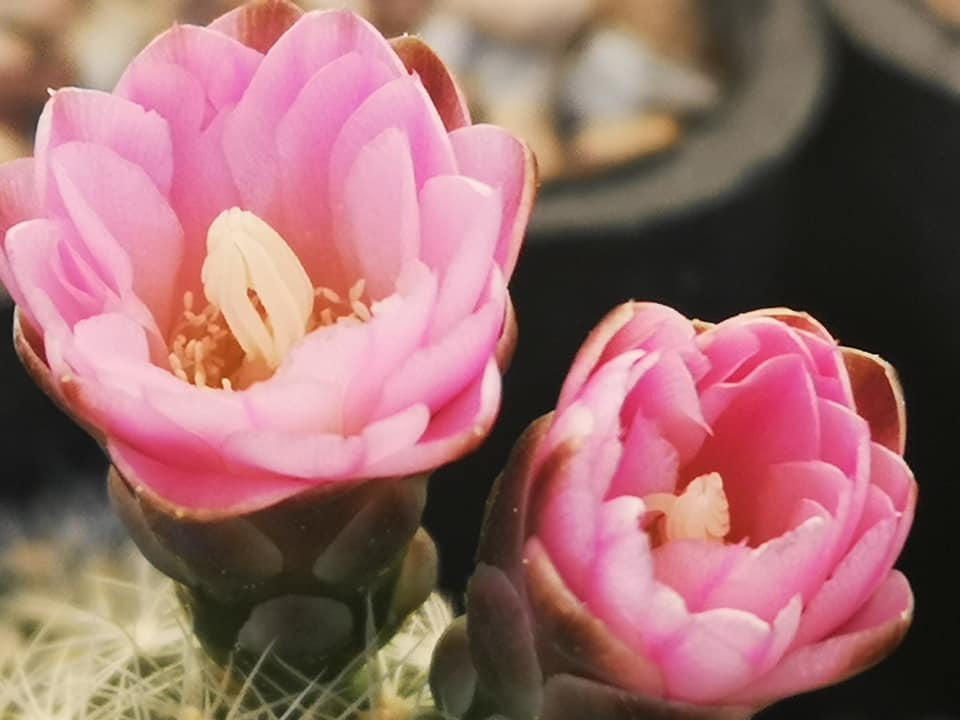 Цветы, плоды, семена